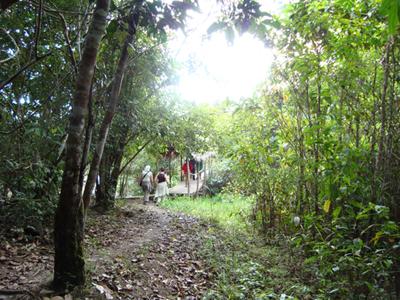 ジャングル2.jpg
