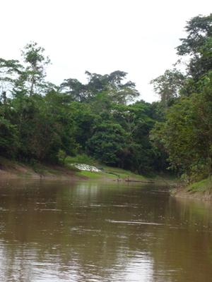 アマゾン川2.jpg