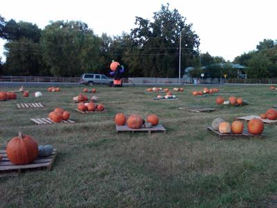 かぼちゃ1.jpg