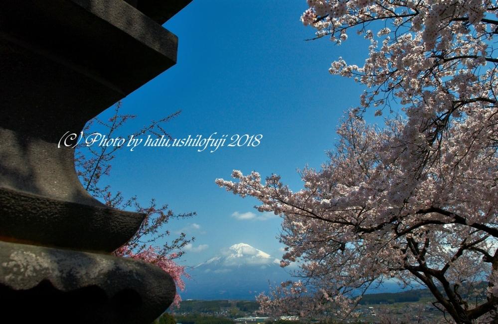 興徳寺 (29)SN