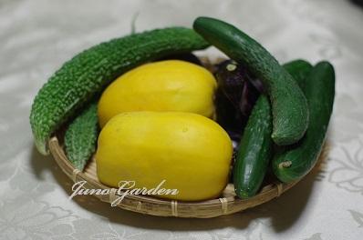 野菜1514