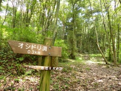 県民の森②