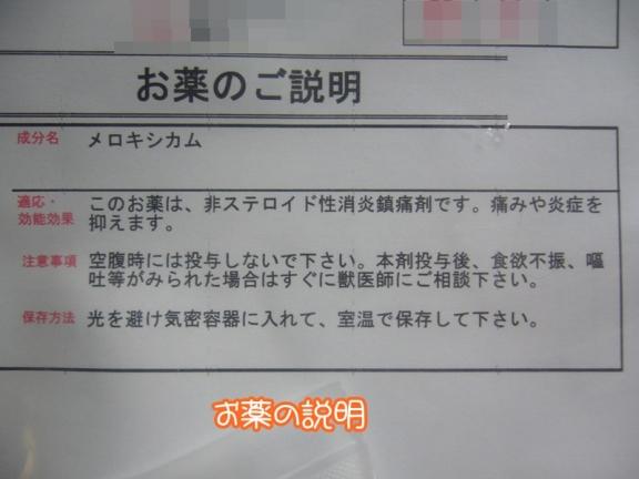 P1160712.jpg