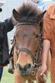 180406 木曽馬乗馬体験-04