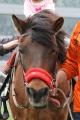 180406 木曽馬乗馬体験-03