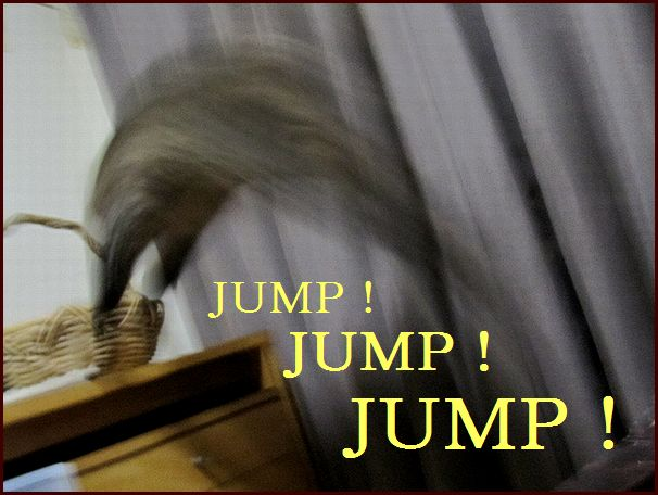 つぶくんのJUMP