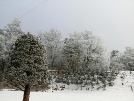 浅間山麓の霧氷