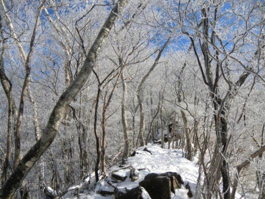 猫岩付近の霧氷