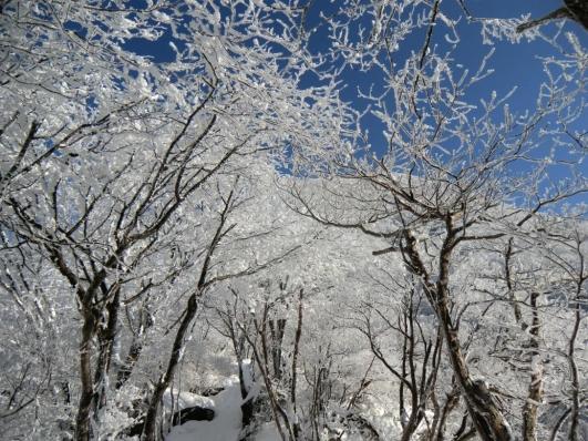 霧氷の森を行く