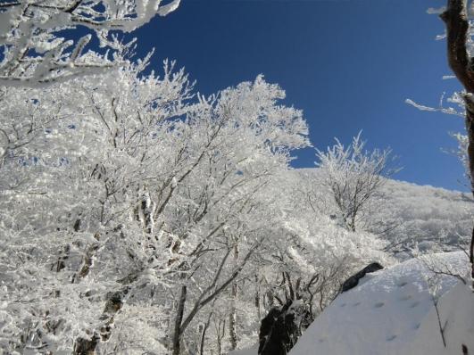 霧氷と黒檜山