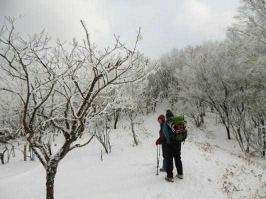 駒ヶ岳へ霧氷もまだ続く