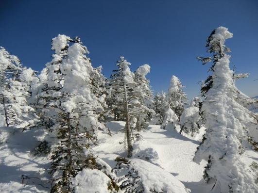 北横岳の樹氷群
