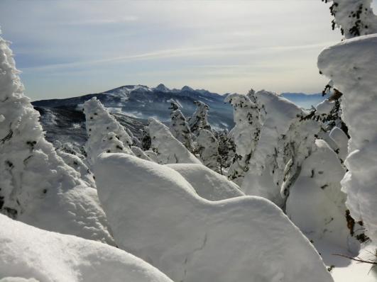 下山路から南八ヶ岳
