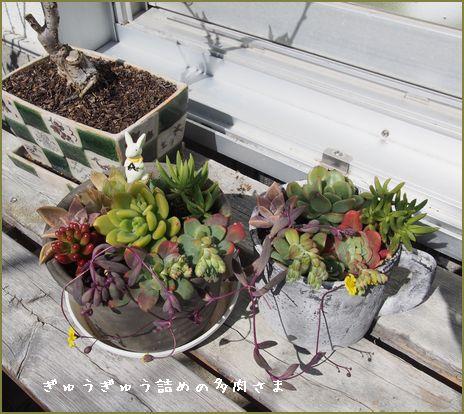 初めて植えてみました。