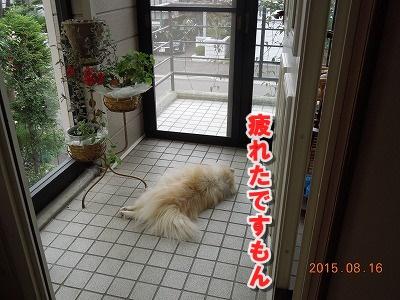2015081605.jpg