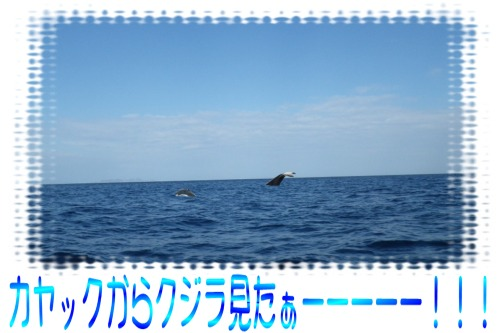 クジラ見たぁー!
