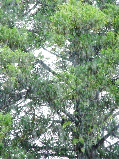 20150817 富士山と恵みの雨 113-2