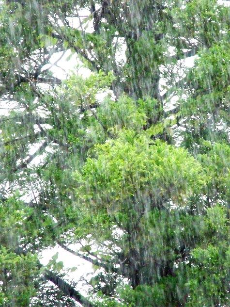 20150817 富士山と恵みの雨 114-2