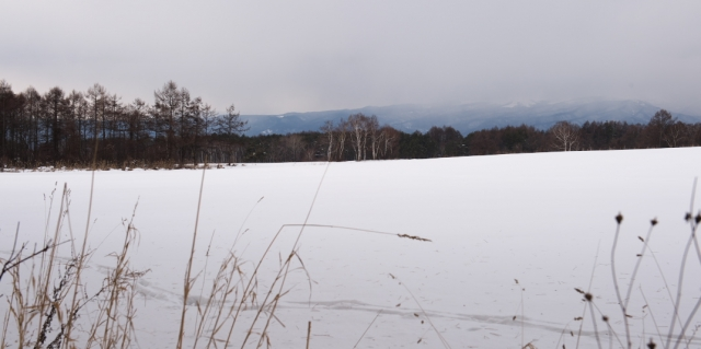 雪原が広がります。