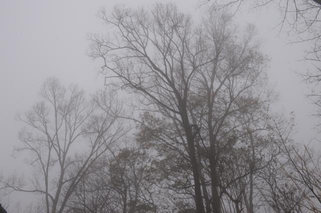 霧と雑木林-2