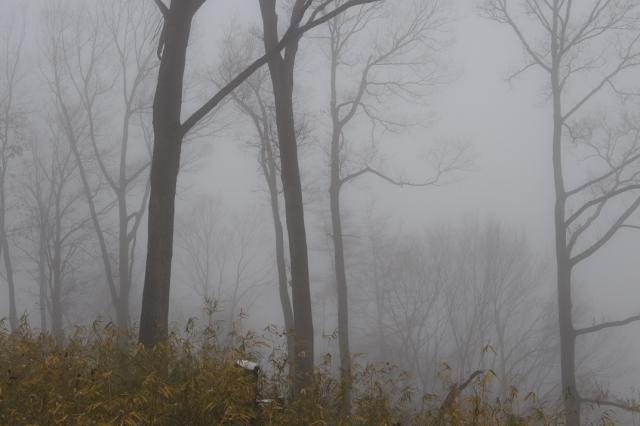 霧と雑木林-1