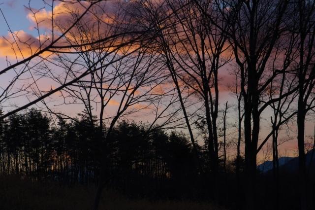 ピンク色に染まる夜明けの雑木林