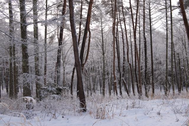 好き林-雪-2