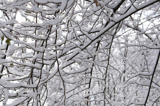 雑木林-雪-1