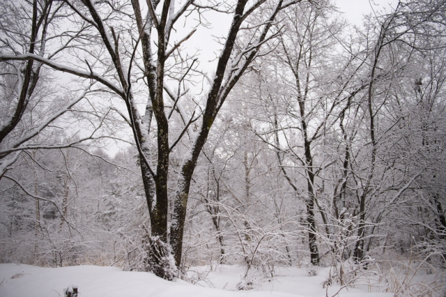 雑木林-雪-0
