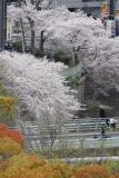 フレール長田から見た満開の桜