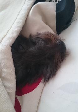 ココロが寝てました。
