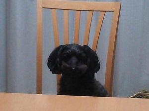 夕飯まだですか?