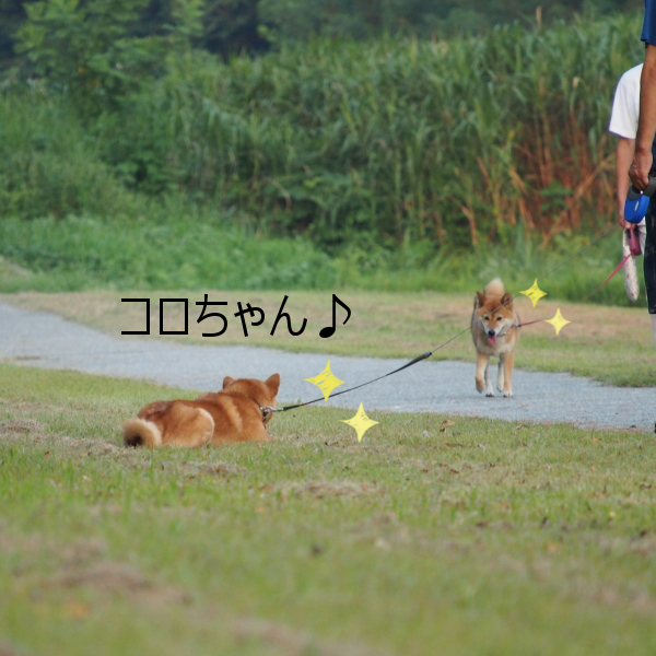 20150816-003.png