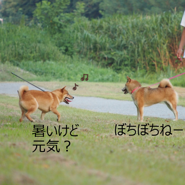 20150816-005.png