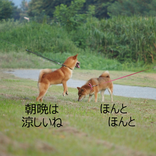 20150816-006.png