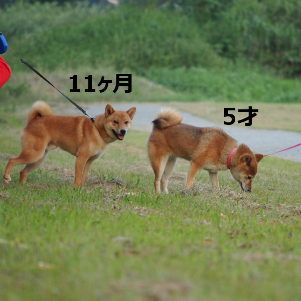 20150816-008.png