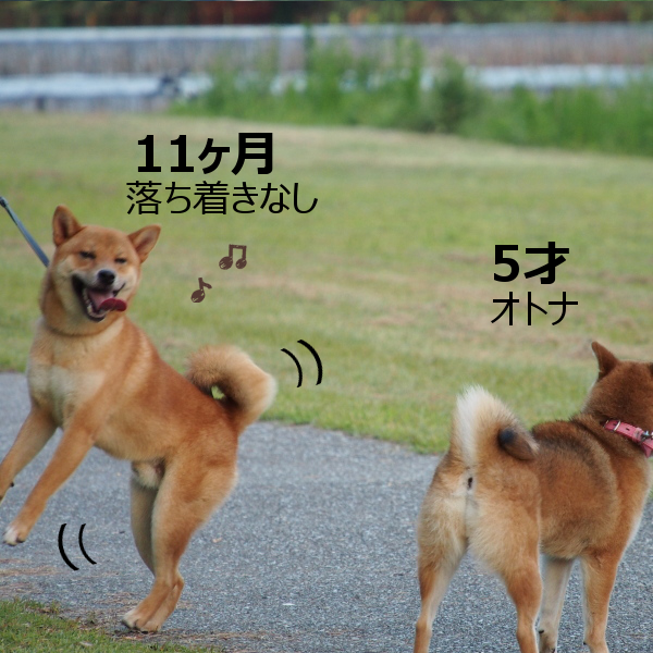 20150816-009.png