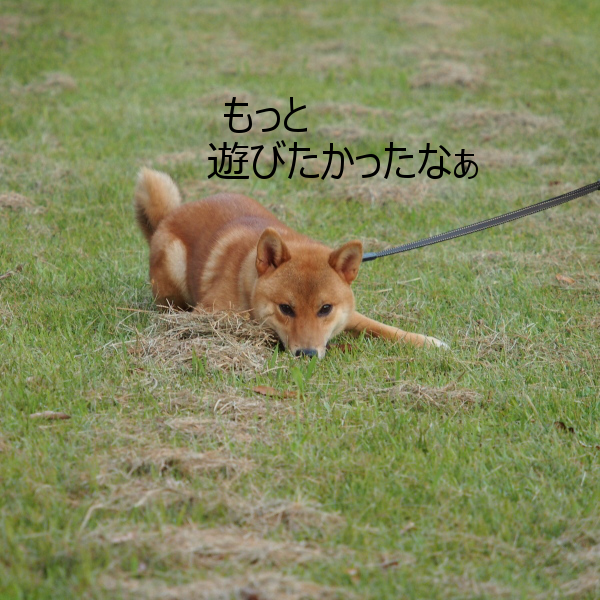 20150816-010.png