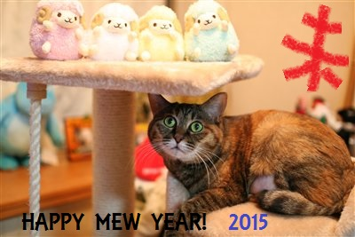 Happy mew year 2015