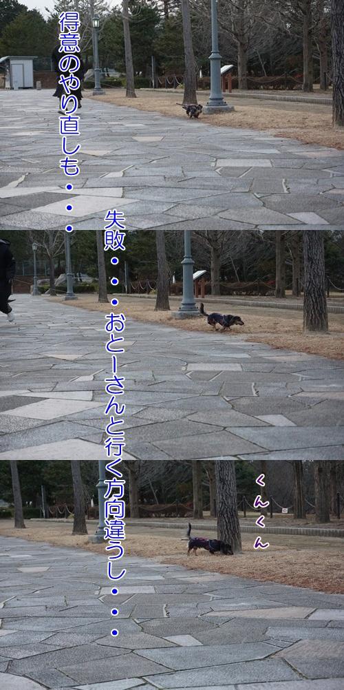 cats201502072.jpg