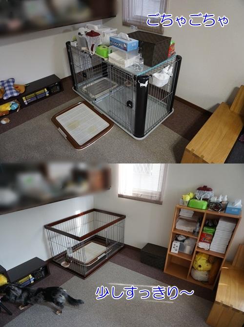 cats201502111.jpg