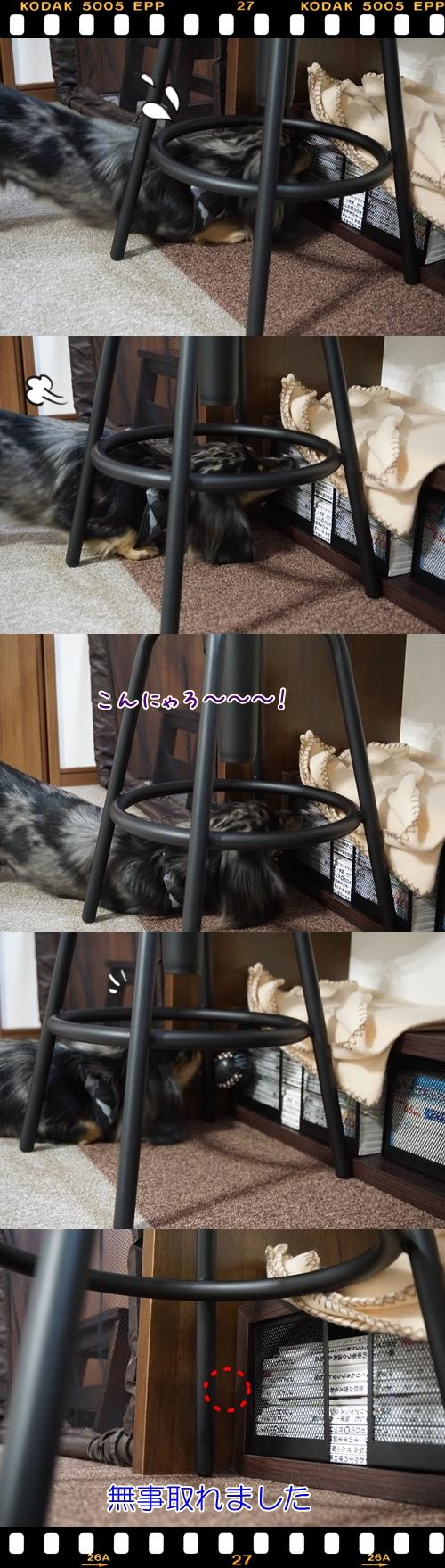 cats201502252.jpg