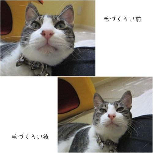 cats5_2015081415292513a.jpg