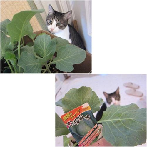 cats5_2015081717445964b.jpg