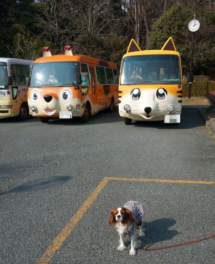 212_9猫バス