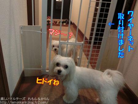 20150814_9.jpg
