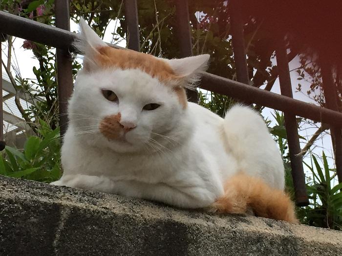 パッツン猫