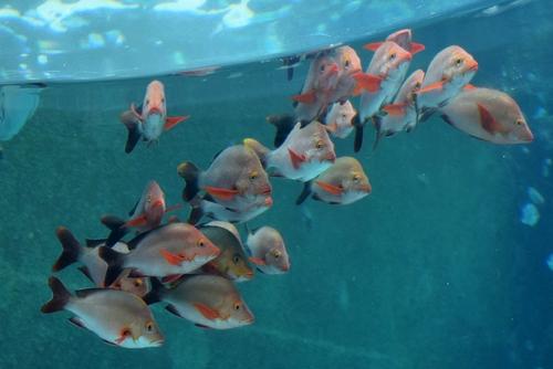 261222 美ら海水族館2