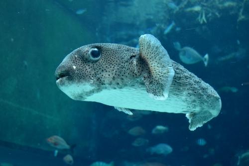 261222 美ら海水族館3
