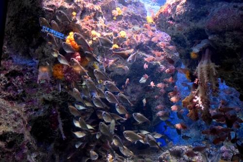 261222 美ら海水族館8